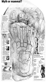 Denver Post Graphic